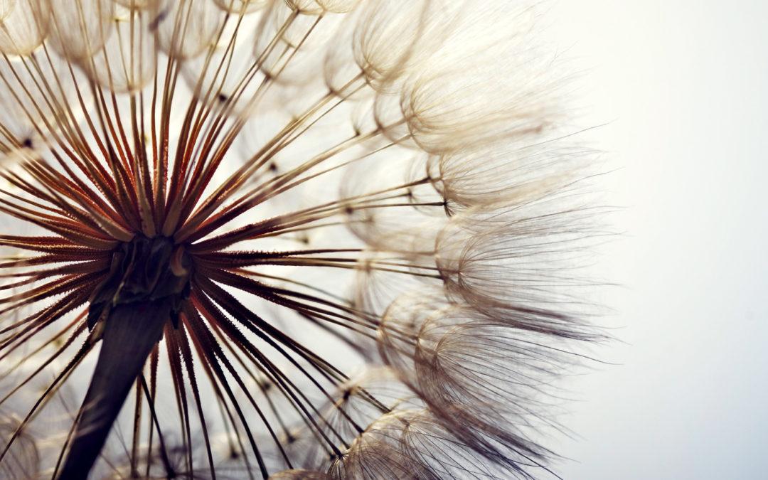 Pogovorne delavnice z meditacijo – 6. srečanje: Čustva in izguba bližnjega